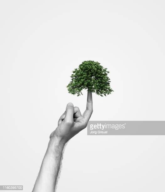 tree growing out of index finger - デジタル合成 ストックフォトと画像