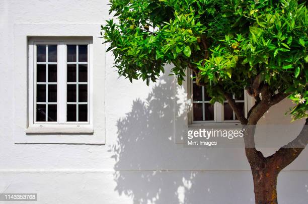 tree growing outside house - facade stock pictures, royalty-free photos & images