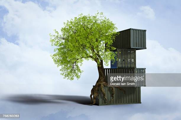 Tree growing roots on stack of cargo containers