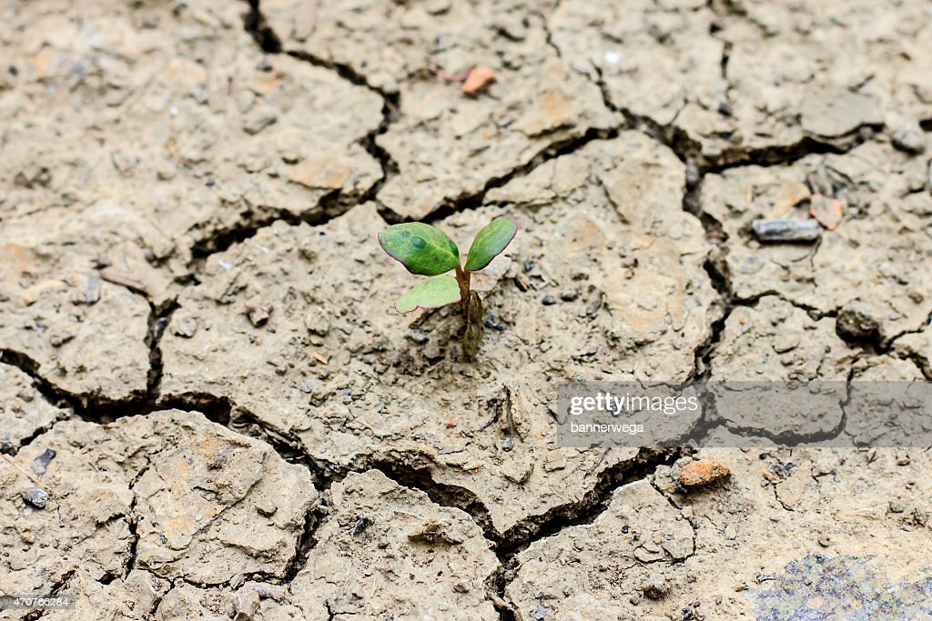 tree growing through dry cracked soil : Stock Photo