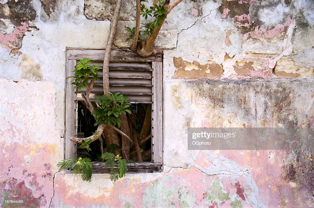 Tree growing through window : Stock Photo