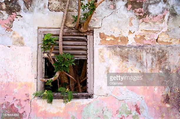 tree growing through window - ogphoto stock pictures, royalty-free photos & images