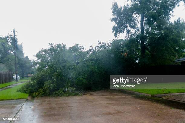 A tree has fallen across the street and knocked a power line down during Hurricane Harvey Monday August 29 2017
