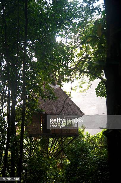 A tree house at the Jungle Hotel Paksong by Green Discovery used on their Tree Top Explorer excursion in the Dong Hua Sao National Protected Area in...