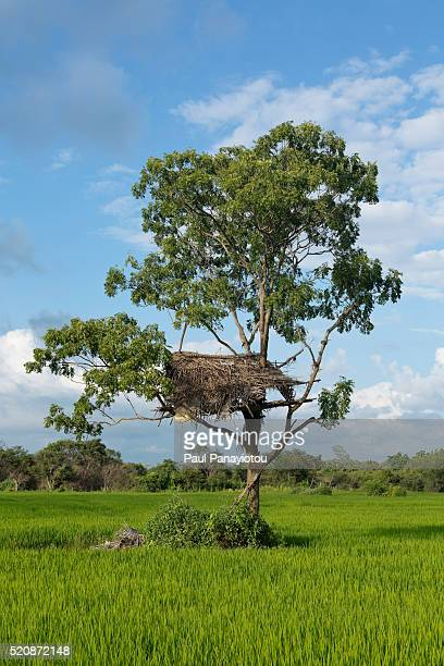 30 Top Sigiriya Sri Lanka Pictures Photos And Images