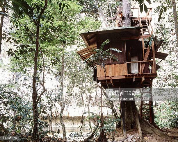 Tree house with roof terrace