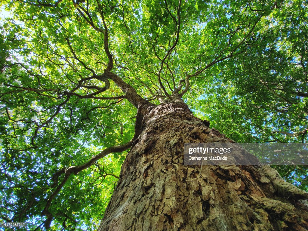 Tree Hugger : Stock Photo