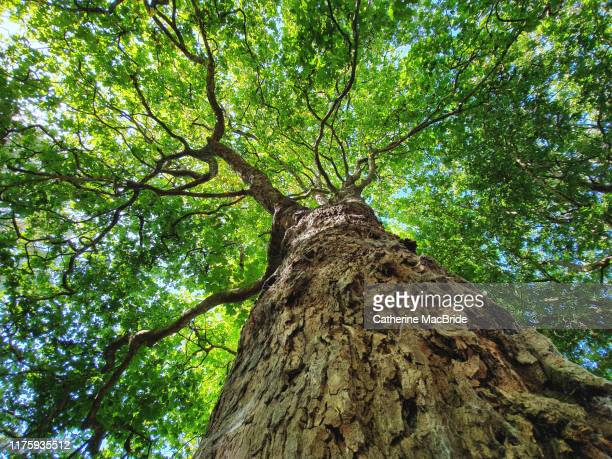 tree hugger - catherine macbride stock photos and pictures