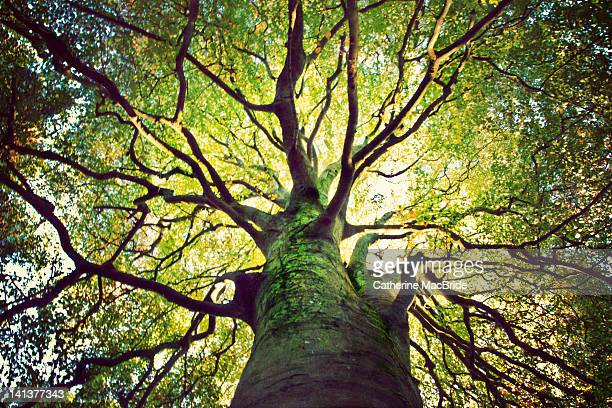 tree hugging - low angle view stock pictures, royalty-free photos & images