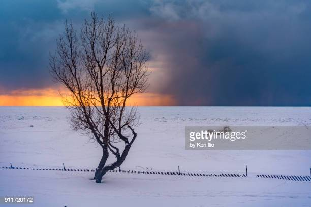 tree, ice and sunset - ken ilio stock photos and pictures