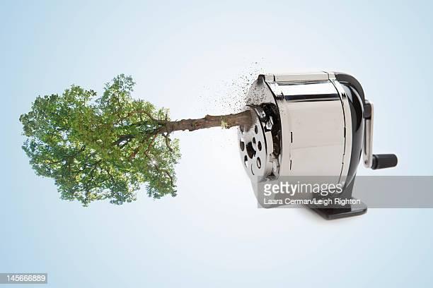 Tree in a pencil sharpener