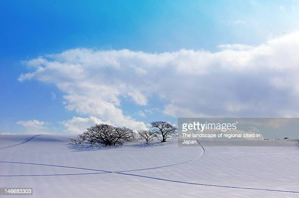tree in a snow field - aomori prefecture stock pictures, royalty-free photos & images