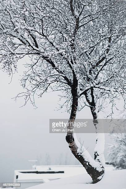 tree in a white out