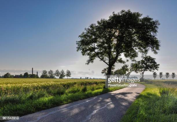 tree in backlight - groningen province stock photos and pictures