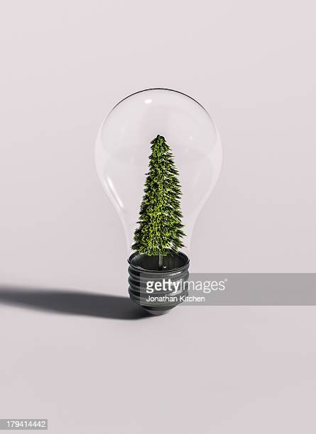 Tree In Bulb on White