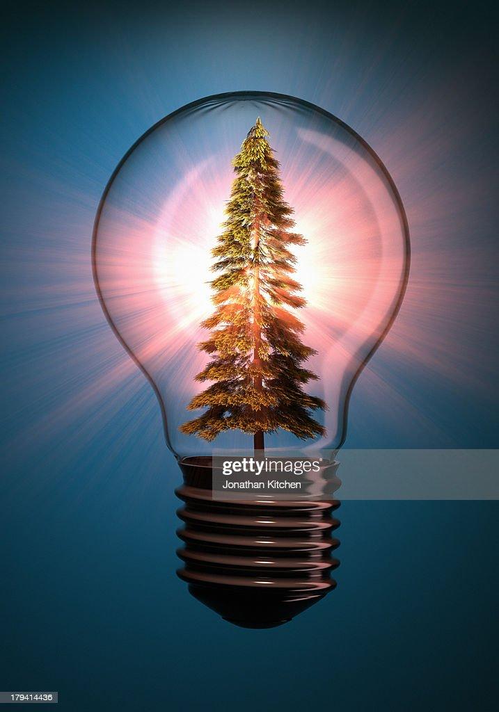 Tree In Bulb : Stock Photo