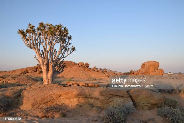 tree in desert against clear sky - claudia romanazzo foto e immagini stock