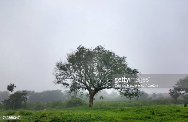 tree in field against clear sky - special:whatlinkshere/file:lucerne_circle,_orlando,_fl.jpg stock pictures, royalty-free photos & images