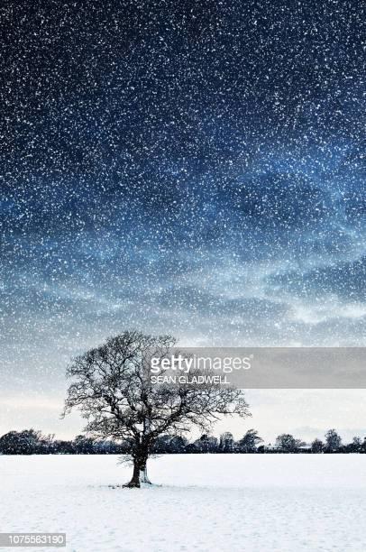 tree in field snowing - country christmas stockfoto's en -beelden