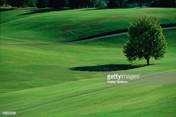 tree in field, summer - pigeon forge stock pictures, royalty-free photos & images