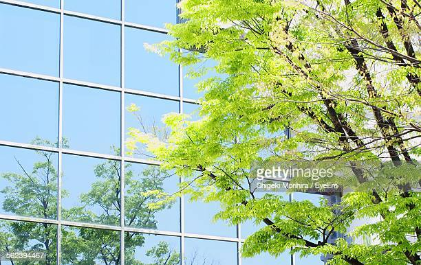 Tree In Front Of Office Building