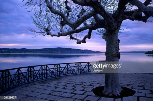 Tree in Lakeside Park
