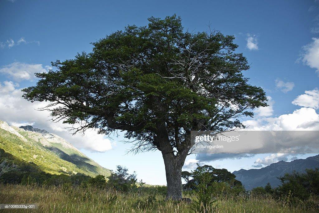 Tree in meadow : Foto stock