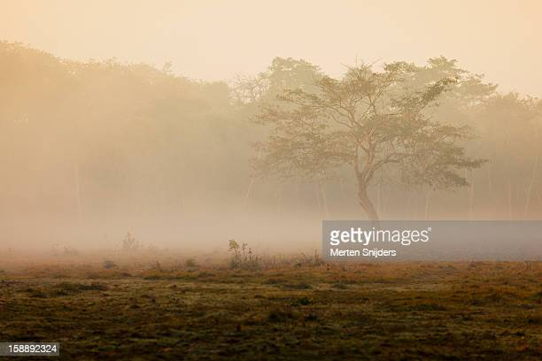 tree in morning mist - merten snijders stockfoto's en -beelden