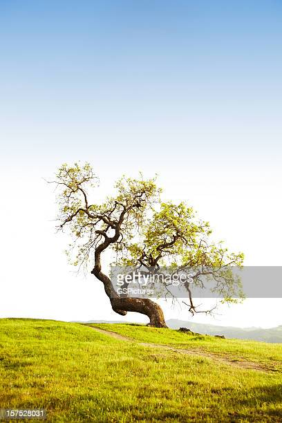 tree in rural setting - origins stock pictures, royalty-free photos & images