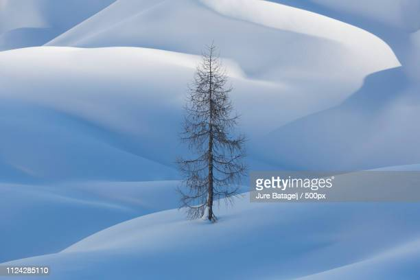 tree in snow - larch tree stock pictures, royalty-free photos & images
