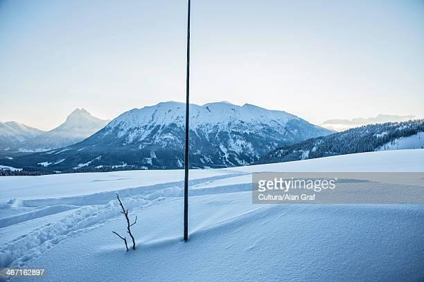 Tree in snowy rural landscape