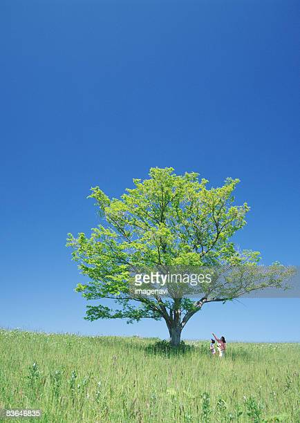 A tree in the field of grass