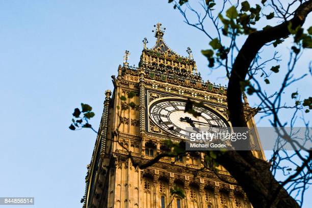 A tree in the foreground frames Big Ben agains a bright blue sky
