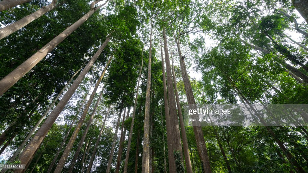 Tree in the forest : Stock Photo