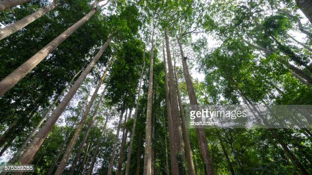 tree in the forest - shaifulzamri stock pictures, royalty-free photos & images
