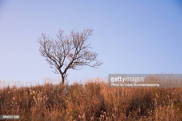 A tree in the grassy meadow