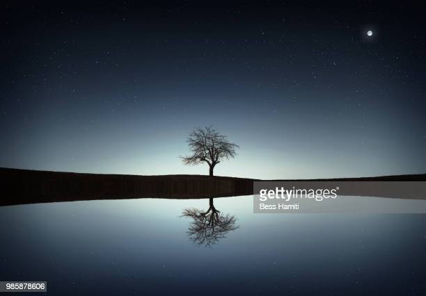 tree in the lake - dawn bess stock pictures, royalty-free photos & images