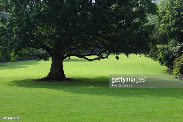 Tree in the middle of green field