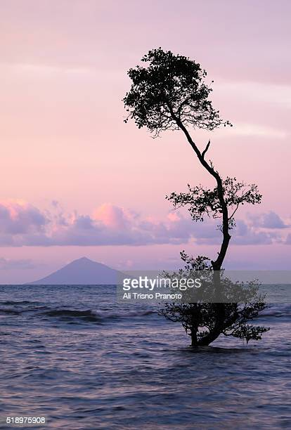 A tree in the sea of Anyer area with Anak Krakatau Mountain far behind