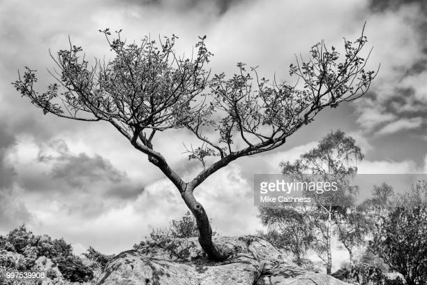 tree in the sky - mike caithness stock pictures, royalty-free photos & images