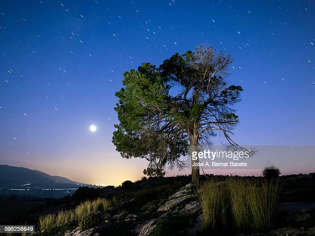 Tree in the top of a mountain with full moon