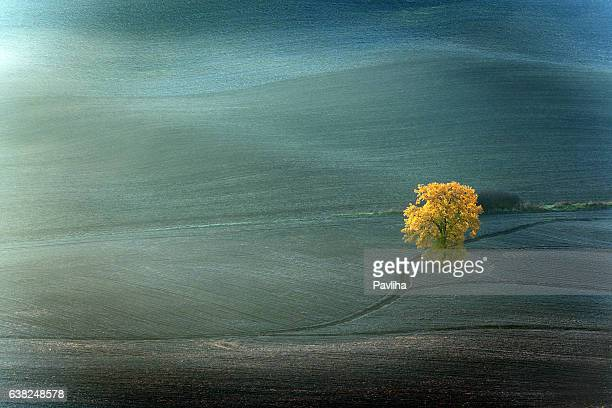 Tree in the valleyl,autumn,oak,Tuscany,Italy