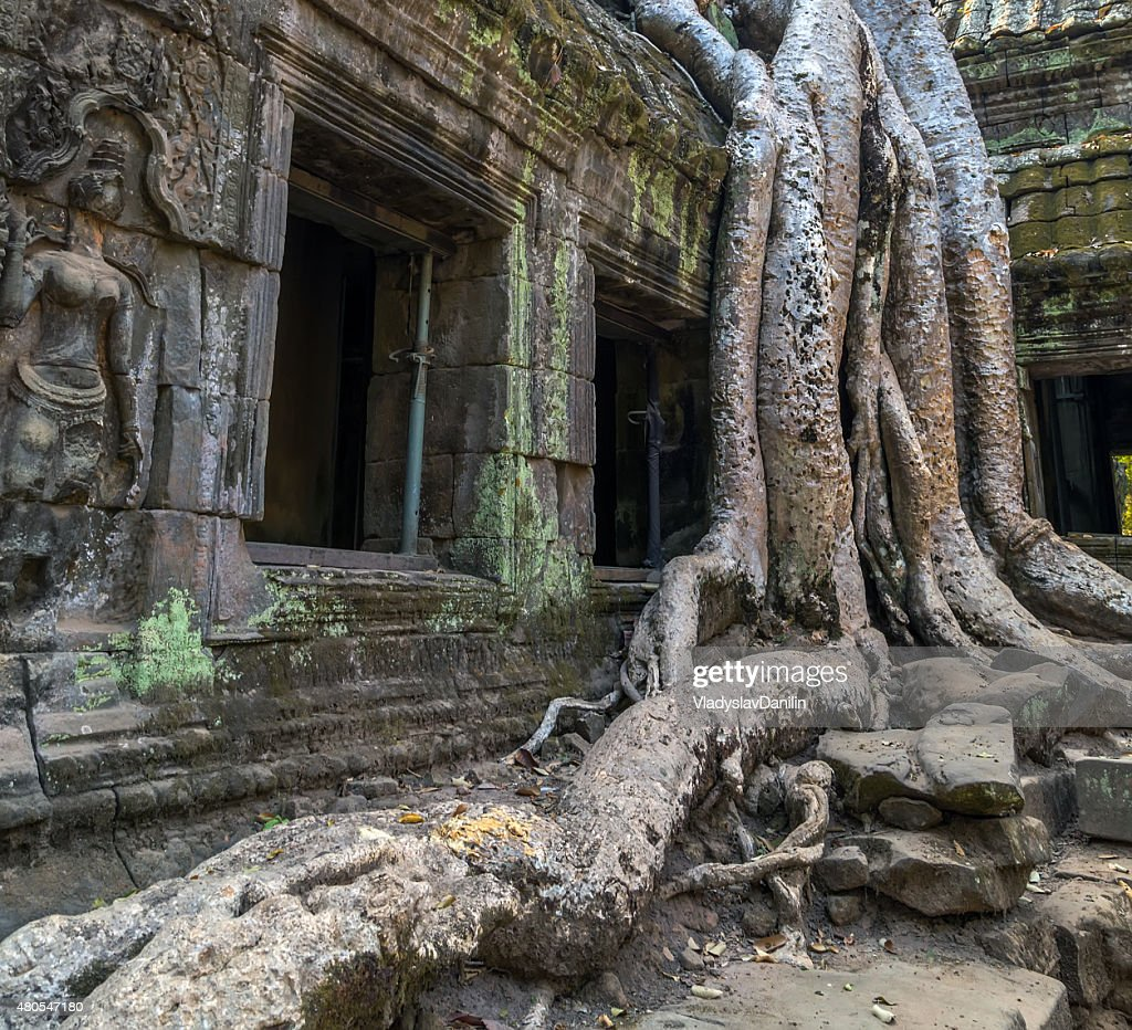 tree in window ruin Ta Prohm, Cambodia. : Stock Photo