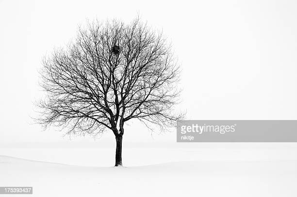 Tree in winter landscape, black and white