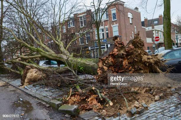 A tree is knocked down on a car as a hurricaneforce storm blows galewinds up to force 12 on January 18 2018 in The Hague Netherlands The Dutch...