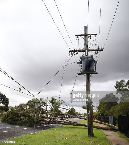 A tree is seen over power lines after cyclonic winds on April 22 2015 near Dungog Australia Three people have died and more than 200000 are still...
