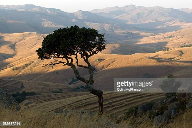 A tree is silhouetted as the sun sets in winter over a valley in the Drakensberg mountains north of Mbabane Swaziland The Kingdom of Swaziland a...