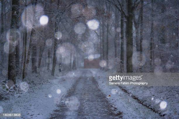 tree lane under snowfall - hainaut stock pictures, royalty-free photos & images