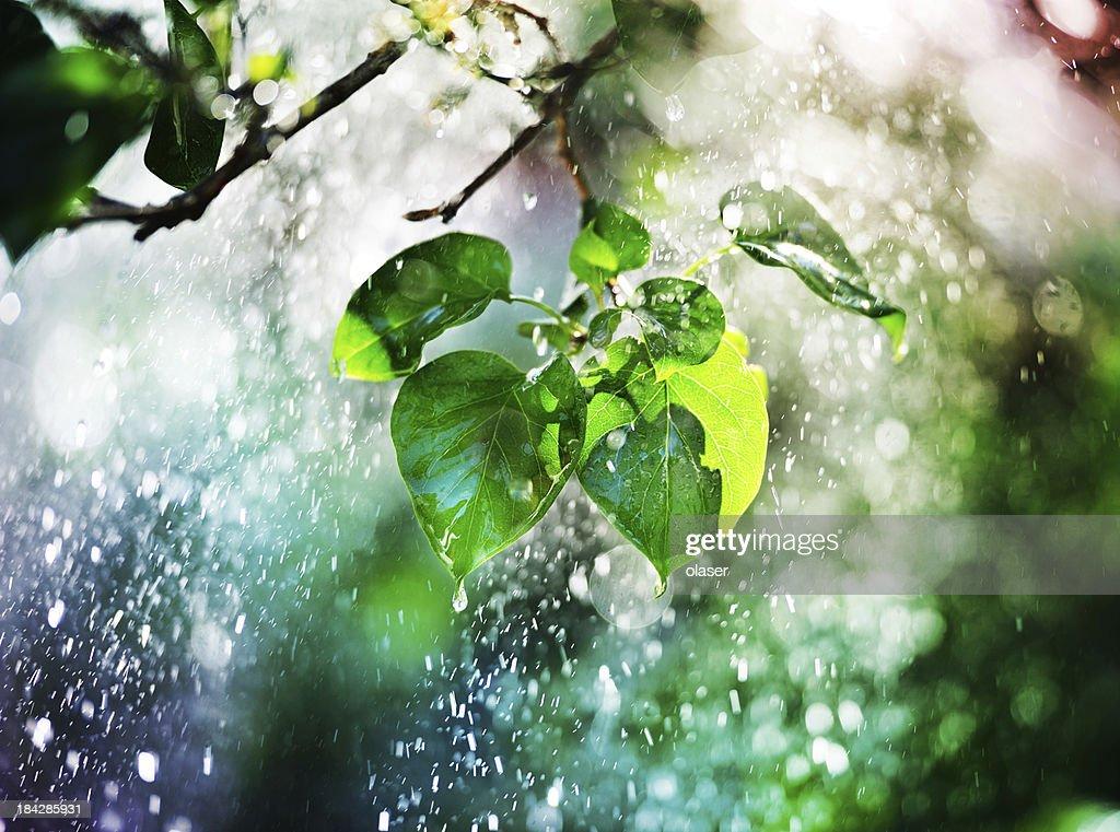 Albero, leafs e pioggia battente al tramonto : Foto stock