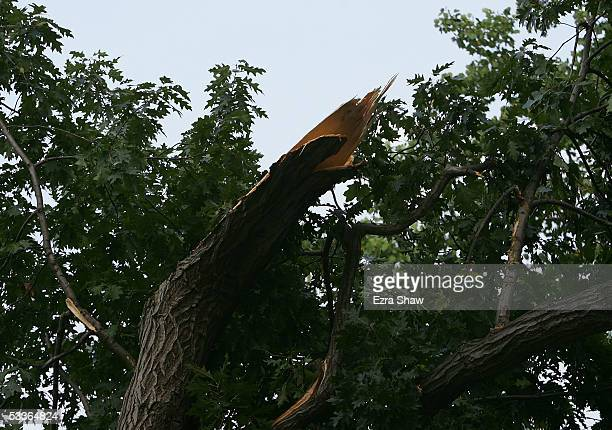 A tree limb hangs down after breaking near the fourth green during the second round of the 2005 PGA Championship at Baltusrol Golf Club on August 12...